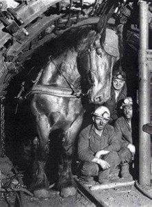 Miners with Percheron