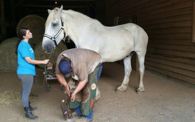 Helping with Farrier