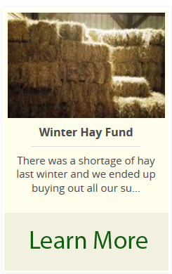 Hay Fund Campaign