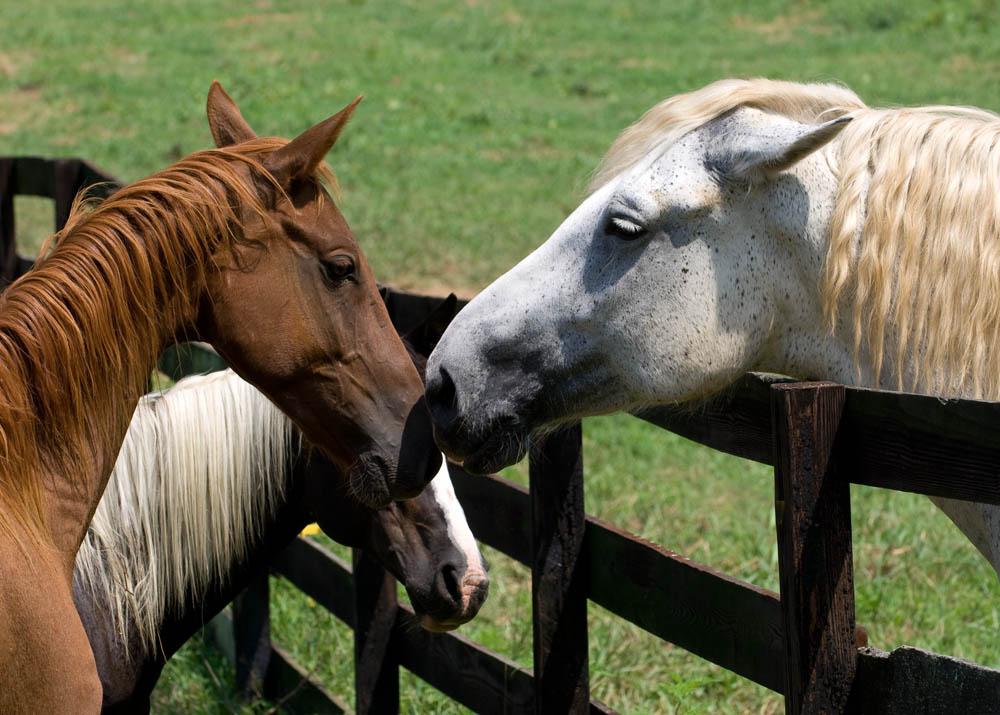 Facilities Iron Gait Percherons Draft Horse Sanctuary
